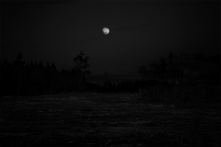 Dark-forrest-download
